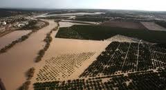 Las lluvias provocan graves problemas e importantes pérdidas a miles de agricultores españoles