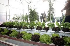 José Manuel Ortiz comparte el malestar de los horticultores de Almería, tras su exclusión de la rebaja fiscal