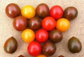 TOP SEEDS avanza en el desarrollo de variedades revolucionarias