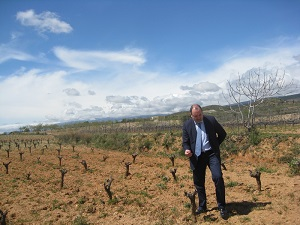 La producción de uva de mesa y de vinificación de Almería se estima que crecerá un 20% la próxima campaña