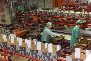 AgrupaEjido mejora sus resultados en kilos, ventas y número de agricultores en los primeros meses de la campaña