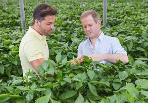NatuGro, el protocolo de Koppert para cosechar con residuo cero, amplía sus herramientas
