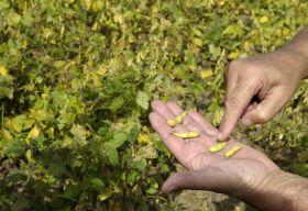 El Parlamento andaluz rechaza una moción en defensa de la agricultura y la ganadería