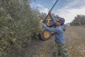 La agricultura andaluza recibe casi 340.000 euros en ayudas del Ministerio