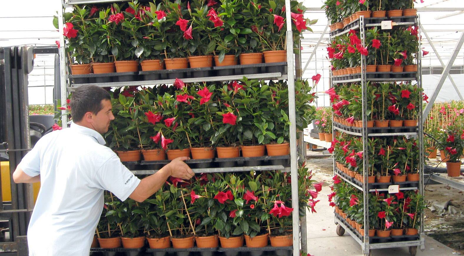 El sector aseguró 2.900 hectáreas protegidas y de tomate en 2013