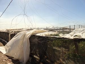 Un tornado arrasa con 15 hectáreas de invernaderos en el Poniente almeriense