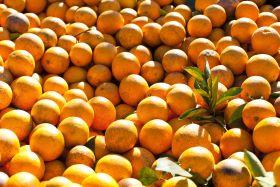 La posibilidad de pago en especie se abre para las frutas de pepita