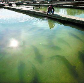 Premios para la investigación en acuicultura