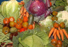 Más de la mitad de la producción agrícola son hortalizas