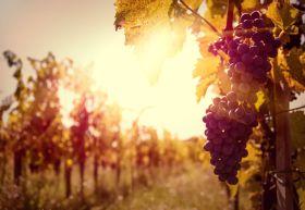El Ministerio analiza los problemas derivados del incremento de producción de vino