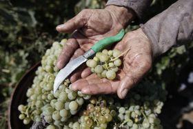 Se busca una salida a la gestión de los excedentes vitivinícolas
