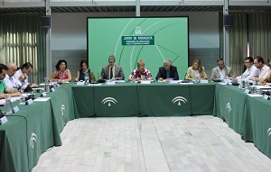 El Plan Director del Olivar promoverá la modernización y competitividad del sector con más de 100 actuaciones