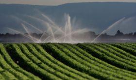El 15% de la superficie agraria de regadío aporta el 50% de la producción en España