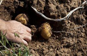 La producción del sector agrario andaluz subirá en un 2 por ciento