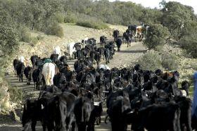 La Junta entrega 4,6 millones en ayudas a la salud animal en explotaciones ganaderas