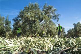 La PAC es favorable para Andalucía, según la ministra