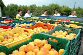La temporada de fruta de verano empieza con mayor demanda que oferta