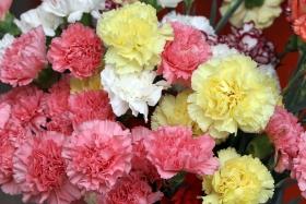 El Ministerio promociona el sector de la flor viva en Francia