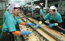 Ayudas para fomentar  la integración de entidades asociativas agroalimentarias por valor de 40,8 millones de euros