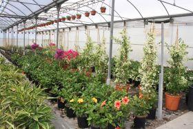 Andalucía lidera la exportación española de flor y planta viva
