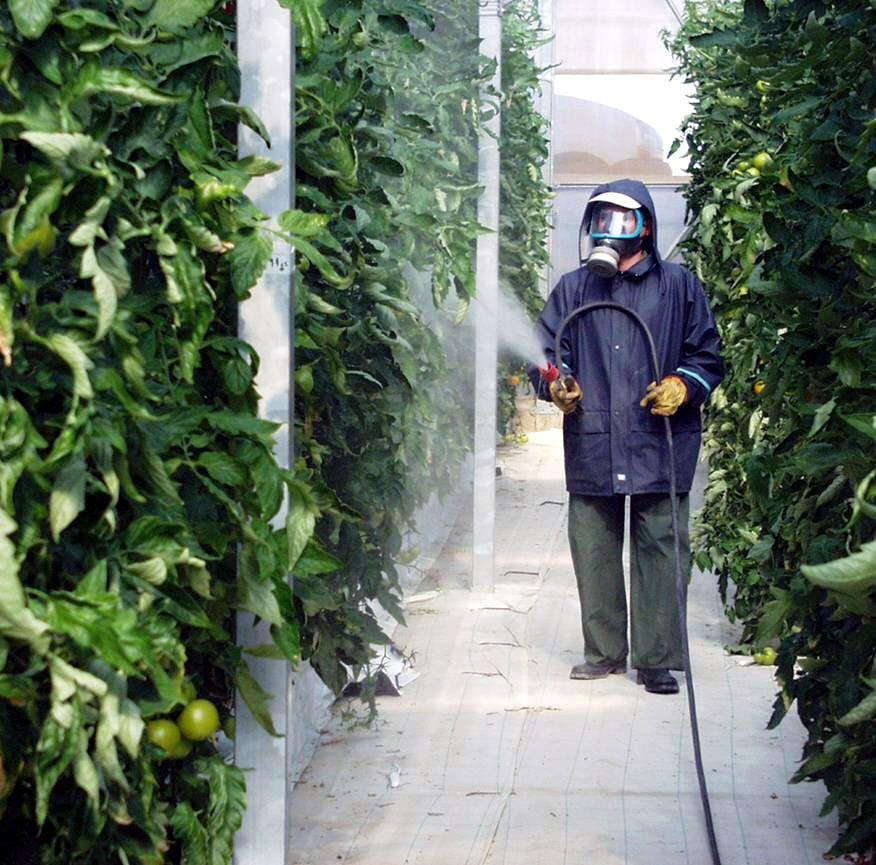 Convocadas las ayudas agroambientales para invernaderos y sistemas sostenibles de uva pasa, dotadas con 13 millones