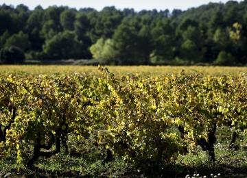 El Ministerio de Agricultura fija en 4.950 hectáreas la superficie que se podrá autorizar para nuevas plantaciones de viñedo en 2018