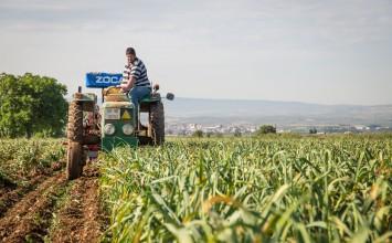 El Gobierno aprueba las bases reguladoras de ayudas para actividades de formación en el ámbito de cooperativismo agroalimentario