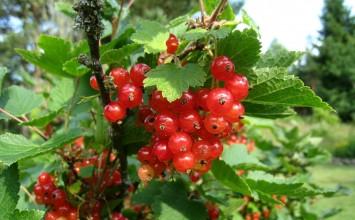 La exportación de frutos rojos procedentes de Andalucía superan los 905 millones de euros
