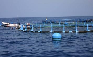 El nuevo decreto de comercialización de productos de  la pesca reforzará la calidad y las garantías de consumo