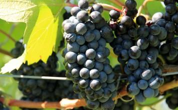 El Ministerio de Agricultura, Alimentación y Medio Ambiente analiza con el sector vitivinícola el comienzo de la campaña 2016/17