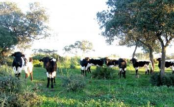 La UE incluye a Granada, Almería y Jaén en la lista de territorios libres de brucelosis bovina