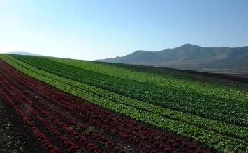 La Junta empieza a pagar 648,5 millones de euros del anticipo de las ayudas directas de la Política Agrícola Común