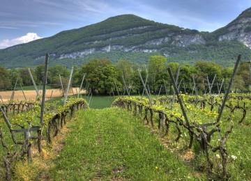 Unión de Uniones lamenta que España haya dejado sin ejecutar casi un 14 % de los fondos de apoyo al sector vitivinícola