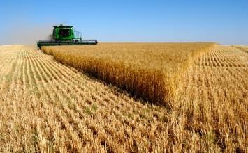 Se incorporan nuevas reducciones de módulos del IRPF para los cereales en la comarca de Baza