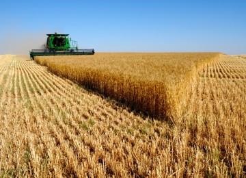 Agricultura resalta que la producción de cebada y avena en Andalucía ha aumentado más de un 55% en 2018