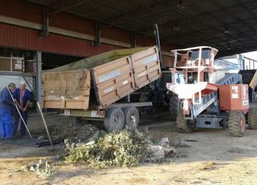 Agricultores denuncian una oleada de robos en almazaras y cooperativas de aceituna