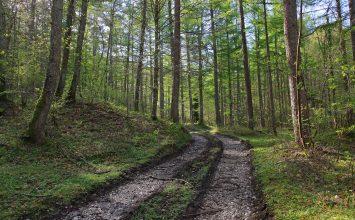 La masa forestal española es, tras la de Suecia, la más grande e importante de Europa