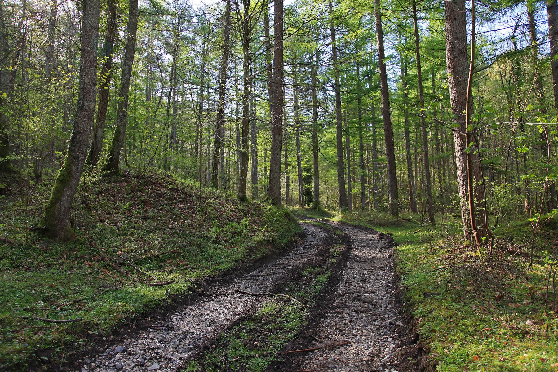 Masa Forestal España