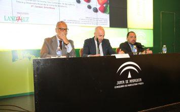 La industria agroalimentaria, clave para la estructura económica de Andalucía