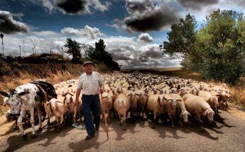 La renta real de los agricultores y ganaderos es un 45% inferior a la renta media española