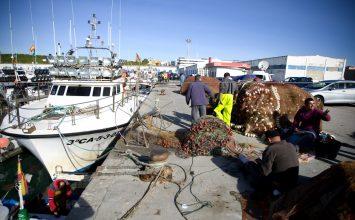 La Secretaría General de Pesca analiza con las CCAA, el sector, el IEO  y las ONGs  las medidas técnicas del Mediterráneo