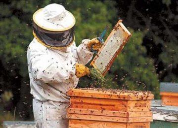 Coag favorece la seguridad en la relación laboral entre apicultores y agricultores