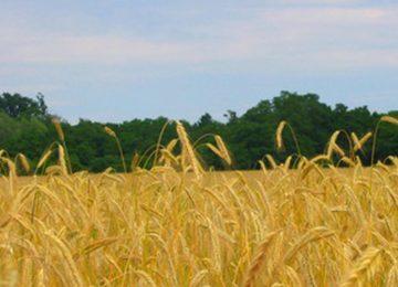 Fundación Copade incorporará al mercado español más de 20 productos bio y de comercio justo