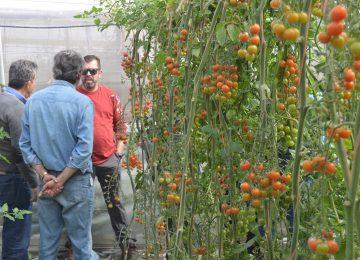 Los precios de frutas y hortalizas en enero dejan 'fríos' a los agricultores