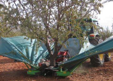 UPA : «La burbuja en la producción de almendra ya ha explotado»