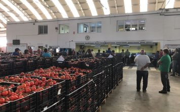 El Consejo de Ministros aprueba facilitar el acceso a ayudas para el asociacionismo en el sector agroalimentario