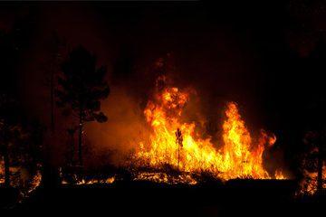 El fuego ha calcinado en España más de 84.000 hectáreas hasta el 3 de septiembre, más de lo que ocupa Madrid
