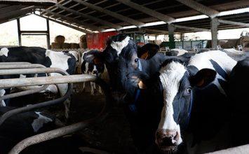 UPA acusa a la industria láctea de dejar a España a la cola de los precios de la leche