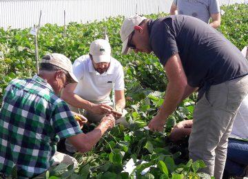Semillas Fitó firma un acuerdo con Basin Seed Company, LLC para adquirir su programa de mejora de judías