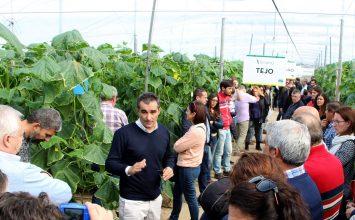 Fitó presenta SmartQ, una línea mejorada de pepino holandés que aporta calidad de fruto en una planta más resistente